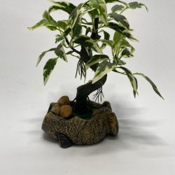 شجرة حجر 22 سم